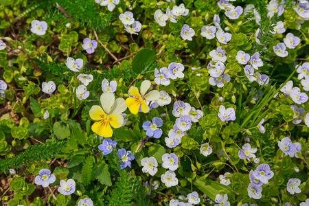 plateau of flowers: Wild flowers on a mountain plateau. Nature Stock Photo