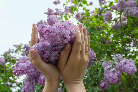 Flowering lilac flowers  in the garden in woman hands