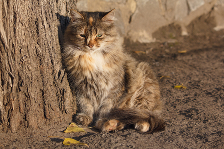 friendless: Homeless cat basking in the rays of the autumn sun Stock Photo