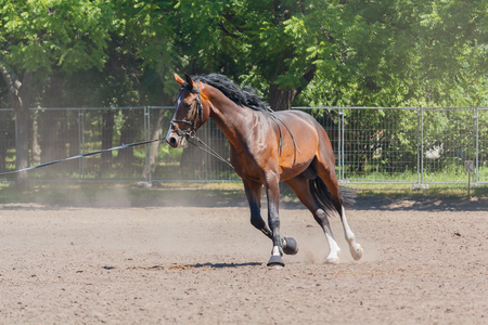 Horse race at the racetrack during training. Sport Stock Photo