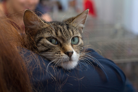 cosily: Kitten in the hands of a volunteer in a shelter for homeless animals. Pets