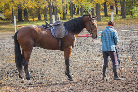 Female and driving horse at the racetrack during practice. Animals