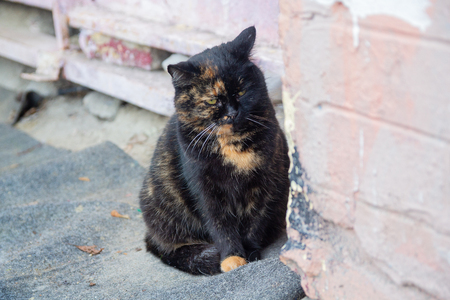 Homeless cat on a city street. Animals Stockfoto