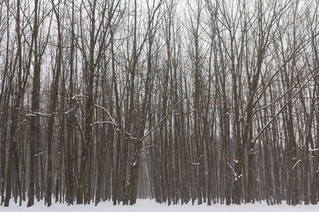Trees in a park covered with fresh snow. Nature Stok Fotoğraf - 117905303