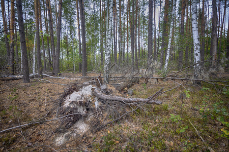 Stump in a clearing in the forest. Nature Stok Fotoğraf - 123903387