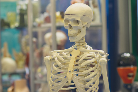 Model of the human skeleton as a medical tool Stok Fotoğraf - 123962965