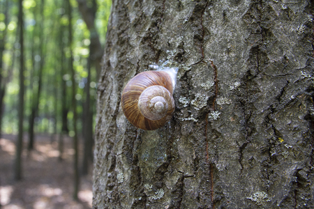 Snail slowly creeps up to the tree. Nature Stok Fotoğraf - 123963099