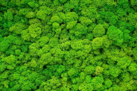 Künstliche grüne Mooswand für Gartendekoration. Hintergründe und Texturen Standard-Bild