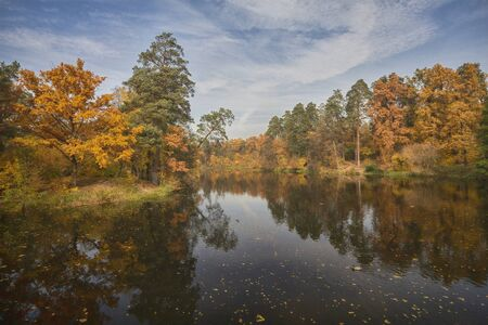 Colorful autumn trees by the lake. Nature