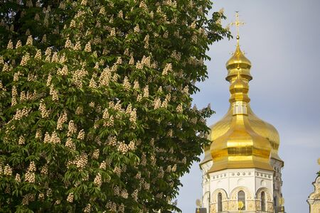 Blossoming chestnut on the background of the golden domes of the church. Kiev, Ukraine