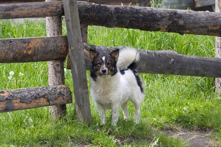 Cute village dog at the fence. Animals