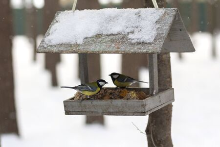Titmouse and feeder in the winter park. Bird