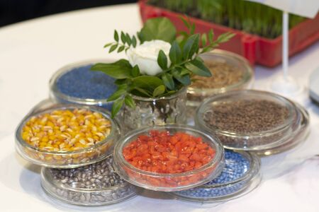 Multi-colored seeds with glass cups on a laboratory table. Agriculture