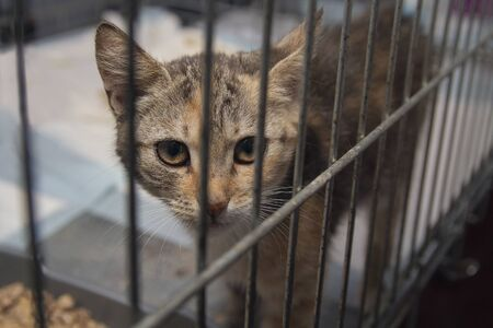 kitten looked out of the cage at the shelter. Pets