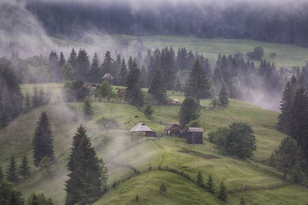 Mountain pasture covered with fog. Carpathians, Ukraine