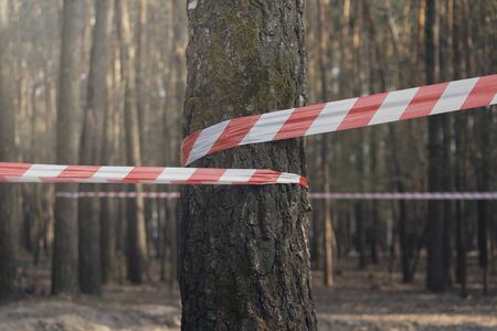 Prevention of a red-white ditch on trees in the forest Stock Photo
