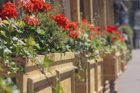 Red flowers in wooden boxes of a street cafe. City Foto de archivo