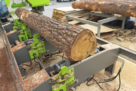 Large tree log is automatically quickly and accurately cut at a modern sawmill. Industry