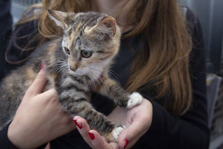 Frightened kitten in the hands of a volunteer in a shelter for homeless animals