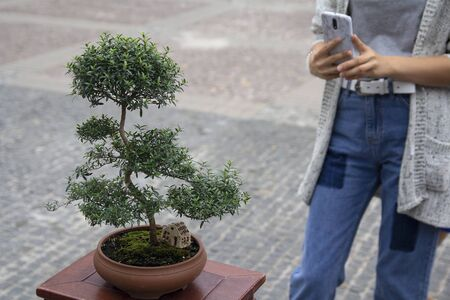 Woman takes pictures on smartphone small bonsai tree. Japanese culture