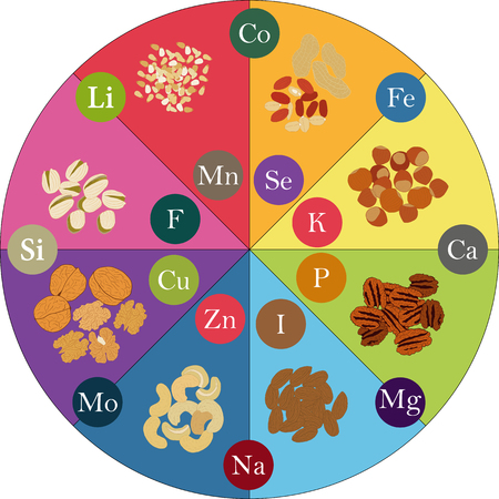 Drawing various nuts and micronutrients. Vector illustration Vettoriali