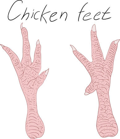 gnarled: Drawing hand chicken feet on a blank background. Vector illustration