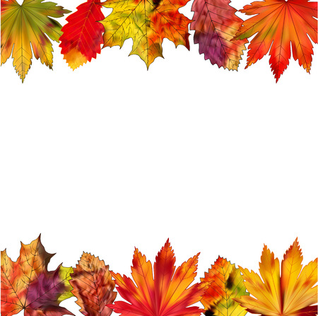 leafage: A set of colorful autumn leaves on a white background.