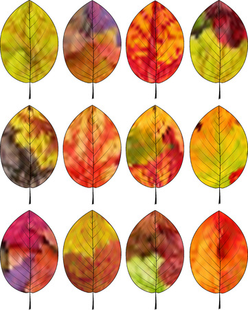 fall leaves on white: A set of colorful autumn leaves on a white background.