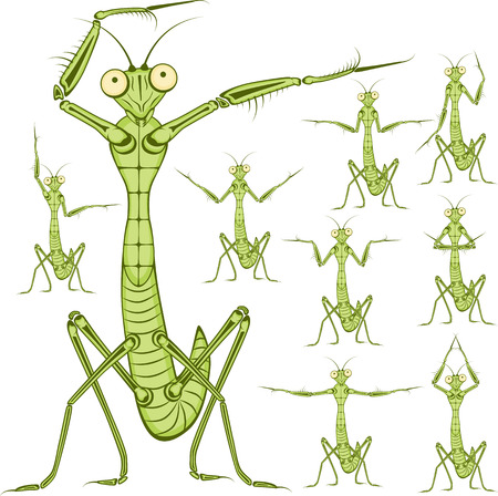 raptorial: Praying mantis. Funny vector illustration. Cartoon character Mantis