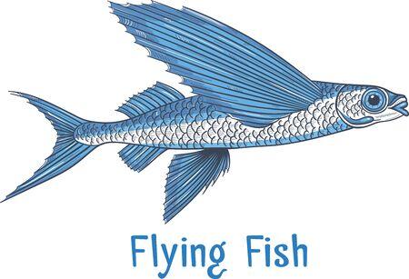 Exocoetidae or Flying fish hand drawing