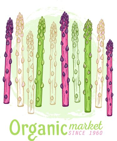 Organic asparagus market hand drawn Stock Illustratie
