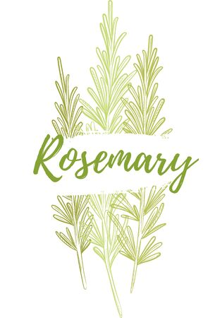 Fresh rosemary herb, natural and delicious food Ilustrace