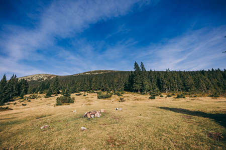 A herd of sheep grazing on a lush green field Stockfoto