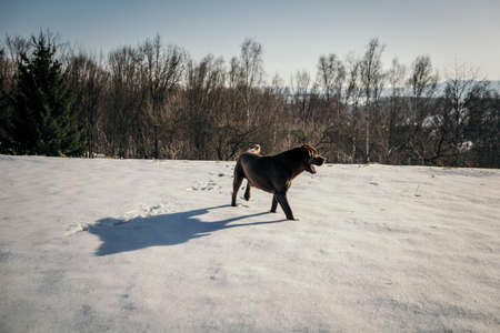 A person riding a horse in the snow