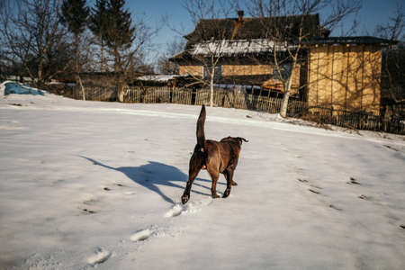 A horse that is walking in the snow Banco de Imagens