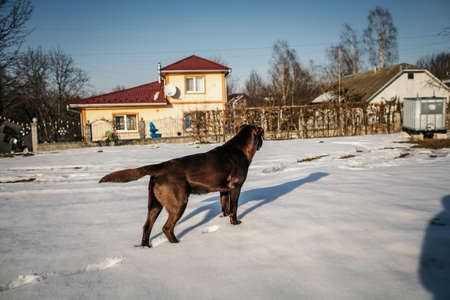 A horse that is walking in front of a house Banco de Imagens