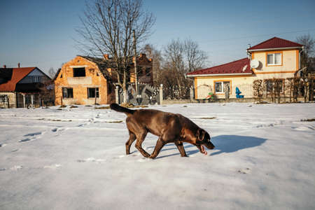A dog walking in front of a house Banco de Imagens