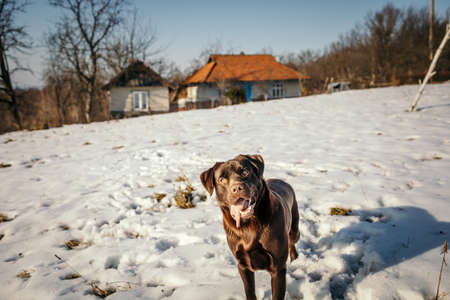 A dog standing on top of a snow covered field