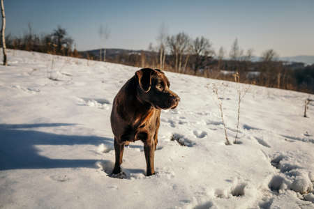 A dog that is standing in the snow