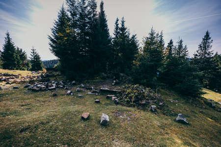 A flock of birds standing on top of a grass covered hillside