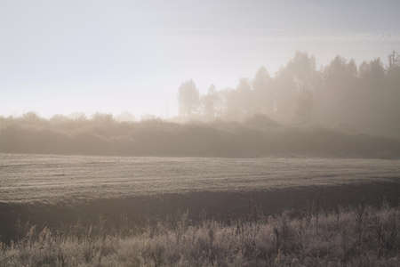 Dawn, misty morning in autumn. The forest in soft tones