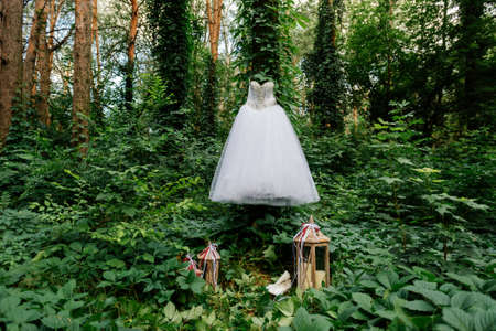 Beautiful white wedding dress hanging on a tree with ivy in sunny day. Free space
