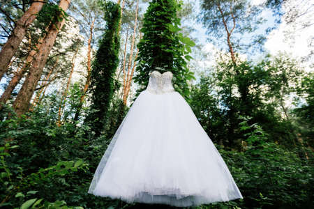 Beautiful white wedding dress hanging on a tree with ivy in sunny day