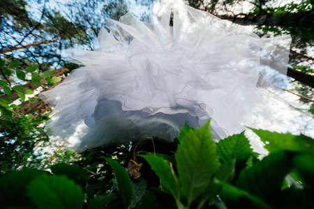 a frill: Bottom view of wedding dress hanging on the tree. Abstract overhang wedding dress Stock Photo