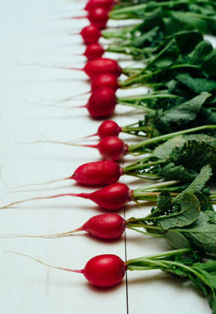 Row of  fresh organic red radishes with tops on white wooden background, selective focus. Vegetable background