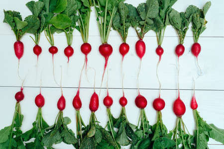 Row of  fresh organic red radishes with tops on white wooden background. Top view. Vegetable background