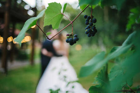 Bunches of ripe wine grapes with green leaves with bride and groom on background in blur
