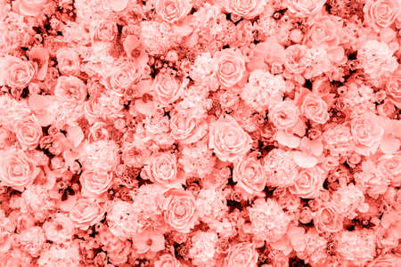 Living Coral background made of roses and many flowers, copy space. Color of the year 2019. Nature floral background. Top view, flat lay. Valentines Day, Womans Day (March 8), Mothers Day, birthday