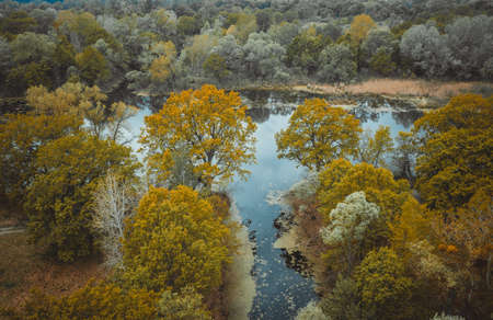 the river and its canals surrounded by oaks. water is covered with algae - Aerial Flight Foto de archivo - 150015795