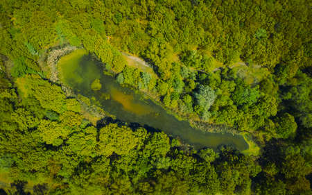 lake surrounded by green spring forest. top view of a mysterious lake covered with green algae - Aerial Flight Foto de archivo